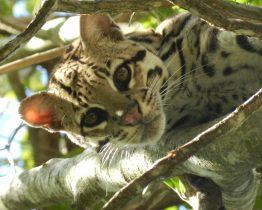 Séjour Nature Jaguar au Brésil